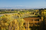autuminal;autumn;autumn-colour;autumn-colours;autumnal;color;colors;colour;colours;country;countryside;crop;crops;deciduous;fall;farm;farming;farmland;farms;field;fruit;fruit-tree;fruit-trees;Havelock-North;Hawkes-Bay;horticulture;N.I.;N.Z.;New-Zealand;NI;North-Island;NZ;orange;orchard;orchards;poplar;poplar-tree;poplar-trees;poplars;row;rows;rural;season;seasonal;seasons;tree;trees;Tukituki-River;Tukituki-Valley;willow;willow-tree;willow-trees;willows;yellow