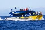 catarmaran;cetacean;cetaceans;kaikoura;kaikoura-canyon;marlborough;new-zealand;ocean;pacific-ocean;Physeter-macrocephalus;sea;south-island;sperm-whale;sperm-whales;tourism;tourist;tourists;travel;traveler;traveling;traveller;travelling;whale;whale-watch-kaikoura;whale-watching