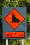 coast;coastal;coastline;driving;fur-seal;fur-seals;highway;highways;kaikoura;Kaikoura-Coast-Road;Kaikoura-Coastal-Road;Marlborough;N.Z.;New-Zealand;New-Zealand-fur-seal;New-Zealand-fur-seals;NZ;NZ-fur-seal;NZ-fur-seals;orange;road;road-network;road-trip;roads;S.I.;seal-warning-sign;seal-warning-signs;SH1;SI;sign;signs;South-Is;South-Island;state-highway-1;state-highway-one;Sth-Is;transport;transportation;travel;traveling;travelling;trip;warning-sign;warning-signs