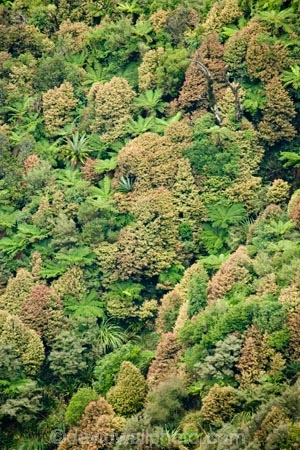 beautiful;beauty;bush;Cordyline-indivisa;cyathea;endemic;fern;ferns;forest;forests;frond;fronds;green;Lower-North-Island;Mountain-Cabbage-Tree;N.I.;N.Z.;native;native-bush;natives;natural;nature;New-Zealand;NI;North-Island;NZ;pittosporum;pittosporums;ponga;pongas;punga;pungas;Ruahine-Forest-Park;Ruahine-Range;Ruahine-Ranges;scene;scenic;Tararua;tree;tree-fern;tree-ferns;trees;wood;woods