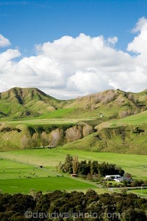 agricultural;agriculture;autuminal;autumn;autumn-colour;autumn-colours;autumnal;color;colors;colour;colours;country;countryside;deciduous;fall;farm;farming;farmland;farms;field;fields;leaf;leaves;Mangaweka;meadow;meadows;N.I.;N.Z.;New-Zealand;NI;North-Island;NZ;paddock;paddocks;pasture;pastures;Rangitikei;rural;season;seasonal;seasons;tree;trees