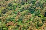 beautiful;beauty;bush;cyathea;endemic;fern;ferns;forest;forests;frond;fronds;green;Lower-North-Island;N.I.;N.Z.;native;native-bush;natives;natural;nature;New-Zealand;NI;North-Island;NZ;pittosporum;pittosporums;ponga;pongas;punga;pungas;Ruahine-Forest-Park;Ruahine-Range;Ruahine-Ranges;scene;scenic;Tararua;tree;tree-fern;tree-ferns;trees;wood;woods