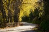 autuminal;autumn;autumn-colour;autumn-colours;autumnal;bend;bends;color;colors;colour;colours;corner;corners;deciduous;driving;fall;fence;fenceline;fencelines;fences;highway;highways;leaf;leaves;Mangaweka;N.I.;N.Z.;New-Zealand;NI;North-Island;NZ;open-road;open-roads;Rangitikei;road;road-trip;roads;season;seasonal;seasons;transport;transportation;travel;traveling;travelling;tree;trees;trip