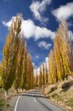 autuminal;autumn;autumn-colour;autumn-colours;autumnal;bend;bends;Central-North-Island;centre-line;centre-lines;centre_line;centre_lines;centreline;centrelines;color;colors;colour;colours;corner;corners;deciduous;driving;fall;leaf;leaves;N.I.;N.Z.;New-Zealand;NI;North-Island;NZ;open-road;open-roads;poplar;poplar-tree;poplar-trees;poplars;Rangitikei-District;road;road-trip;roads;Ruanui;Ruanui-Road;season;seasonal;seasons;transport;transportation;travel;traveling;travelling;tree;trees;trip