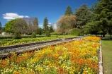 bloom;blooming;blooms;blossom;blossoming;blossoms;elizabeth;flower;flower-bed;flower-beds;flowers;Fresh;garden;gardens;grow;Growth;hosking;Hosking-Garden;island;Lower-North-Island;masterton;N.I.;N.Z.;new;new-zealand;NI;north;North-Is;north-is.;north-island;NZ;o8l0696;park;public-garden;public-gardens;queen;Queen-Elizabeth-II-Park;Queen-Elizabeth-II-Pk;Queen-Elizabeth-Park;Queen-Elizabeth-Pk;renew;season;seasonal;seasons;spring;springtime;the;The-Hosking-Garden;wairarapa;yellow;zealand