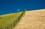 agricultural;agriculture;blue-skies;blue-sky;country;countryside;dry-grass;farm;farming;farmland;farms;fence;fenceline;fencelines;fences;field;fields;grass;green-grass;hill;hills;Lower-North-Island;Martinborough;meadow;meadows;N.I.;N.Z.;New-Zealand;NI;North-Is;North-Island;NZ;paddock;paddocks;pasture;pastures;rural;sky;Wairarapa;wet-and-dry
