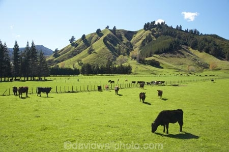 South Island High Country Farming