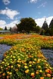 Blenheim;bloom;blooming;blooms;Botanic-Garden;Botanic-Gardens;Botanical-Garden;Botanical-Gardens;floral;flower;flower-beds;flower-garden;flower-gardens;flowers;fresh;grow;growth;Marlborough;N.Z.;New-Zealand;NZ;orange;park;parks;Pollard-Park;renew;S.I.;season;seasonal;seasons;SI;South-Is;South-Is.;South-Island;spring;spring-time;spring_time;springtime;Sth-Is;violet;yellow
