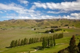 agricultural;agriculture;Blenheim;country;countryside;crop;crops;cultivation;fairway;fairways;farm;farming;farmland;farms;field;fields;golf-course;golf-courses;grape;grapes;grapevine;green;greens;horticulture;Marlborough;meadow;meadows;N.Z.;New-Zealand;NZ;paddock;paddocks;pasture;pastures;row;rows;rural;S.I.;SI;South-Is;South-Island;Sth-Is;vine;vines;vineyard;vineyards;vintage;wine;wineries;winery;wines