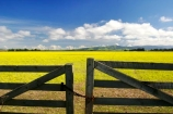 agricultural;agriculture;canterbury;chain;chained;chains;close;closed;cloud;clouds;color;colors;colour;colours;country;countryside;crop;cropping;crops;cultivate;cultivation;farm;farming;farmland;farms;fence;fences;field;fields;flower;flowers;gate;gate_way;gate_ways;gates;gateway;gateways;horticultural;horticulture;latch;lock;meadow;meadows;new-zealand;paddock;paddocks;pasture;pastures;rape-seed;rapeseed;rural;shut;sky;south-canterbury;south-island;yellow