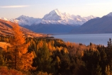 mountain;peak;mount-cook;color;colours;colors;trees;forest;snow;snow-covered;snow_covered;orange;autumnal;lake;lakes;slope;scenic;scenary;tourism;natural;spectacular;beauty;highest;mountains;southern-alps;main-divide