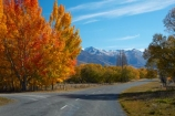 autuminal;autumn;autumn-colour;autumn-colours;autumnal;Ben-Ohau-Range;Canterbury;color;colors;colour;colours;deciduous;fall;Glen-Lyon-Rd;Glen-Lyon-Road;gold;golden;highway;highways;leaf;leaves;Mackenzie-Country;Mackenzie-Region;N.Z.;New-Zealand;NZ;open-road;open-roads;road;road-trip;roads;S.I.;season;seasonal;seasons;SI;South-Canterbury;South-Is;South-Island;Sth-Is;tree;trees;Twizel;yellow