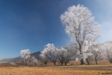 beautiful;calm;calmness;clean;clear;cold;Coldness;Color;Colour;Daytime;Exterior;freeze;freezing;freezing-fog;frost;Frosted;frosty;high-country;hoar-frost;Hoarfrost;ice;icy;idyllic;Landscape;Landscapes;mackenzie;mackenzie-country;waitaki-district;twizel;natural;Nature;new-zealand;Outdoor;Outdoors;Outside;peaceful;Peacefulness;phenomena;phenomenon;pure;Quiet;Quietness;Scenic;Scenics;Season;Seasons;silence;south-island;spectacular;stunning;sunny;tourism;tranquil;tranquility;tree;trees;view;waitaki;water;weather;White;winter;Wintertime;wintery;wintry;grass;grassy;farm;farmland;farms;farming;field;fields;paddock;paddocks;meadow;meadows;pasture;pastures;rural;agriculture;agricultural;country;countryside;farm-buildings;farm-building;woolshed;woolsheds;sheepshed;sheepsheds;wool-shed;wool-sheds;sheep-shed