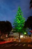 Bay-of-Plenty;car;car-lights;cars;dark;evening;light;light-trails;lights;long-exposure;Maunganui-Rd;Maunganui-Road;Mount-Maunganui;Mt-Maunganui;Mt.-Maunganui;N.I.;N.Z.;New-Zealand;NI;night;night-time;night_time;Norfolk-Pine;Norfolk-Pine-Trees;Norfolk-Pines;North-Is;North-Is.;North-Island;NZ;tail-light;tail-lights;tail_light;tail_lights;Tauranga;time-exposure;time-exposures;time_exposure;traffic;tree;trees
