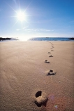 beach;track;tracks;beaches;footprint;footprints;sun;sunny;dawn;early-morning;foot-print