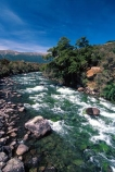 Buller-River;St-Arnaud;Nelson-Lakes-National-Park;rivers;south-island;new-zealand;clean-clear;green;rapid;rapids;national-parks;nelson-lakes;natural;stream;streams;brook;brooks;creek;creeks;bubbling;moss;lush;verdant