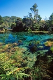 Pupu-Springs;Takaka;Golden-Bay;South-Island;pure;purity;clean;clear;spring;springs;mineral;natural;water;Waikoropupu;freshwater;fresh-water