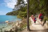Abel-Tasman-Coast-Track;Abel-Tasman-Coastal-Track;Abel-Tasman-N.P.;Abel-Tasman-National-Park;Abel-Tasman-NP;Bark-Bay;beautiful;beauty;bush;child;children;endemic;families;family;forest;forests;green;hike;hiker;hikers;hiking;kids;model-release;model-released;mother;mothers;N.Z.;national-park;national-parks;native;native-bush;natives;natural;nature;Nelson-Region;New-Zealand;NZ;people;person;S.I.;scene;scenic;SI;South-Is.;South-Island;timber;tramp;tramper;trampers;tramping;tree;trees;trek;treker;trekers;treking;trekker;trekkers;trekking;walk;walker;walkers;walking;wood;woods