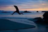 Abel-Tasman;Abel-Tasman-N.P.;Abel-Tasman-National-Park;Abel-Tasman-NP;beach;beaches;boy;boys;coast;coastal;coastline;coastlines;coasts;creek;creeks;dusk;evening;hot;jump;jumping;Mosquito-Bay;N.Z.;national-park;national-parks;Nelson-Region;New-Zealand;night;night_time;nightfall;NZ;ocean;oceans;S.I.;sea;seas;shore;shoreline;shorelines;shores;silhouette;silhouettes;South-Is;South-Island;Sth-Is;stream;streams;summer;sunset;sunsets;Tasman-Bay;Tasman-District;teenager;teenagers;twilight;water