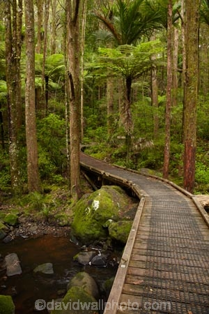 A.H.-Reed-Memorial-Kauri-Park;A.H.-Reed-Memorial-Park;beautiful;beauty;bridge;bridges;brook;brooks;bush;creek;creeks;cyathea;endemic;fern;ferns;flora;flow;foot-bridge;foot-bridges;footbridge;footbridges;forest;forestry;forests;frond;fronds;green;hiking-track;hiking-tracks;Kauri-Forest;Kauri-Forests;lush;N.I.;N.Z.;native;native-bush;natives;natural;nature;New-Zealand;NI;North-Is;North-Is.;North-Island;Northland;NZ;outdoor;outdoors;pedestrian-bridge;pedestrian-bridges;plant;plants;ponga;pongas;punga;pungas;rain-forest;rain-forests;rain_forest;rain_forests;rainforest;rainforests;scene;scenic;stream;streams;track;tracks;tree;tree-fern;tree-ferns;tree-trunk;tree-trunks;trees;trunk;trunks;undergrowth;Waikoromiko-Stream;walking-track;walking-tracks;water;watercourse;wet;Whangarei;wood;woods