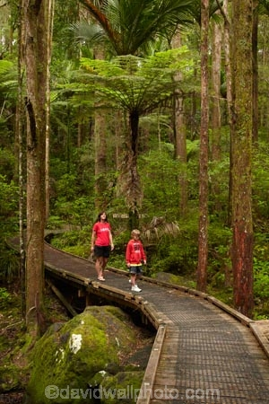 A.H.-Reed-Memorial-Kauri-Park;A.H.-Reed-Memorial-Park;adult;beautiful;beauty;boy;boys;bridge;bridges;bush;child;children;cyathea;endemic;fern;ferns;foot-bridge;foot-bridges;footbridge;footbridges;forest;forests;frond;fronds;green;hiking-track;hiking-tracks;Kauri-Forest;Kauri-Forests;mother;mothers;N.I.;N.Z.;native;native-bush;natives;natural;nature;New-Zealand;NI;North-Is;North-Is.;North-Island;Northland;NZ;pedestrian-bridge;pedestrian-bridges;people;person;plant;plants;ponga;pongas;punga;pungas;rain-forest;rain-forests;rain_forest;rain_forests;rainforest;rainforests;scene;scenic;son;tourism;tourist;tourists;track;tracks;tree;tree-fern;tree-ferns;tree-trunk;tree-trunks;trees;trunk;trunks;Waikoromiko-Stream;walking-track;walking-tracks;Whangarei;woman;wood;woods