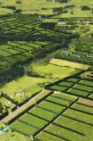 aerial;aerials;agricultural;agriculture;bay-of-islands;country;countryside;crop;crops;farm;farming;farmland;farms;field;fields;fruit;hedgerow;hedgerows;horticultural;horticulture;kerikeri;kiwi-fruit;kiwifruit;meadow;meadows;new-zealand;north-is.;north-island;north-islands;northland;orchard;orchards;paddock;paddocks;pasture;pastures;rural;sub-tropical;sub_tropical;windbreak;windbreaks