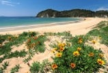 beaches;color;colour;flower;flowers;orange;sand;summer;yellow