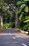 bitumen;black-tree-fern;botany;bush;fern;ferns;flora;foiliage;forests;mamaku;native;ponga;punga;road;roading;roads;timber;trees;wood