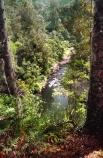 black-tree-fern;botany;bush;fern;ferns;flora;foiliage;forests;mamaku;native;pond;ponga;punga;river;stream;timber;trees;wood