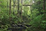 A.H.-Reed-Memorial-Kauri-Park;aerial-walkway;beautiful;beauty;boardwalk;boardwalks;bridge;bridges;brook;brooks;bush;canopy-walk;creek;creeks;endemic;fern;ferns;flora;footbridge;footbridges;forest;forestry;forests;green;kauri;kauris;lush;native;native-bush;natives;natural;nature;new-zealand;north-is.;north-island;Northland;outdoor;outdoors;rain-forest;rain-forests;rain_forest;rain_forests;rainforest;rainforests;scene;scenic;stream;streams;timber;tree;tree-trunk;tree-trunks;trees;trunk;trunks;undergrowth;walkway;watercourse;Whangarei;wood;woods