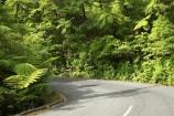 bend;bends;bitumen;black-tree-fern;botany;bush;centreline;corner;corners;driving;fern;ferns;flora;foiliage;forests;mamaku;native;native-forest;new-zealand;north-is.;north-island;Northland;ponga;punga;road;roading;roads;timber;transport;transportation;travel;traveling;travelling;trees;Waipoua-Forest;waipoua-kauri-forest;wood