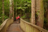 A.H.-Reed-Memorial-Kauri-Park;aerial-walkway;beautiful;beauty;boardwalk;boardwalks;bridge;bridges;bush;canopy-walk;endemic;fern;ferns;flora;foot-bridge;foot-bridges;footbridge;footbridges;forest;forestry;forests;green;hiking-track;hiking-tracks;kauri;Kauri-Forest;Kauri-Forests;kauris;lush;N.I.;N.Z.;native;native-bush;natives;natural;nature;New-Zealand;NI;North-Is;North-Is.;north-island;Northland;NZ;outdoor;outdoors;pedestrian-bridge;pedestrian-bridges;people;person;rain-forest;rain-forests;rain_forest;rain_forests;rainforest;rainforests;scene;scenic;timber;tourism;tourist;tourists;track;tracks;tree;tree-trunk;tree-trunks;trees;trunk;trunks;walking-track;walking-tracks;walkway;Whangarei;wood;woods