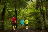 beautiful;beauty;boardwalk;boardwalks;boy;boys;brother;brothers;bush;child;children;cyathea;endemic;families;family;fern;ferns;footpath;footpaths;forest;forest-reserve;forest-track;forest-tracks;forests;frond;fronds;girl;girls;green;hiking-track;hiking-tracks;kauri-forest;Kauri-Forests;Kerikeri;kid;kids;little-boy;little-girl;lush;Manginangina;Manginangina-Kauri-Walk;Manginangina-Walk;mother;mothers;N.I.;N.Z.;native;native-bush;natives;natural;nature;New-Zealand;NI;North-Is;North-Is.;North-Island;Northland;NZ;path;paths;people;person;plant;plants;ponga;pongas;Puketi-Forest;punga;pungas;rain-forest;rain-forests;rain_forest;rain_forests;rainforest;rainforests;scene;scenic;sibbling;sibblings;sister;sisters;small-boys;small-girls;timber;tourism;tourist;tourists;track;tracks;tree;tree-fern;tree-ferns;trees;walking-track;walking-tracks;wood;woods