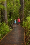 beautiful;beauty;boardwalk;boardwalks;boy;boys;brother;brothers;bush;child;children;endemic;families;family;footpath;footpaths;forest;forest-reserve;forest-track;forest-tracks;forests;girl;girls;green;hiking-track;hiking-tracks;kauri-forest;kauri-forests;Kauri-Tree;Kauri-Trees;Kerikeri;kid;kids;little-boy;little-girl;lush;Manginangina;Manginangina-Kauri-Walk;Manginangina-Walk;mother;mothers;N.I.;N.Z.;native;native-bush;natives;natural;nature;New-Zealand;NI;North-Is;North-Is.;North-Island;Northland;NZ;path;paths;people;person;Puketi-Forest;rain-forest;rain-forests;rain_forest;rain_forests;rainforest;rainforests;scene;scenic;sibbling;sibblings;sister;sisters;small-boys;small-girls;timber;tourism;tourist;tourists;track;tracks;tree;tree-trunk;tree-trunks;trees;trunk;trunks;walking-track;walking-tracks;wood;woods