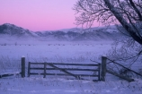 branch;cold;dusk;freeze;freezing;frost;frosty;gate;hoar;ice;last-light;mountain;mountains;slippery;snow;sunset;tree;twilight;winter