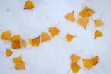 autuminal;autumn;autumn-colour;autumn-colours;autumnal;cold;color;colors;colour;colours;deciduous;fall;freeze;freezing;leaf;leaves;N.Z.;New-Zealand;North-Otago;NZ;Otago;Otamatata;poplar;poplar-tree;poplar-trees;poplars;S.I.;season;seasonal;seasons;SI;snow;snowy;South-Island;Waitaki-District;Waitaki-Valley;white;winter;wintery