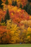 Arrowtown;Arrowtown-Hill;Asian-tourists;autuminal;autumn;autumn-colour;autumn-colours;autumn-leaves;autumnal;central-otago;Chinese-tourists;color;colors;colour;colours;conifer;conifers;deciduous;fall;gold;golden;larch;leaf;leaves;mountain-ash;N.Z.;near-Queenstown;New-Zealand;NZ;orange;orange-mountain-ash;Otago;park;parks;people;person;pine;pine-tree;pine-trees;pines;Queenstown;reserve;rowan;rowan-tree;rowan-trees;S.I.;season;seasonal;seasons;SI;sorbus;Sorbus-aucaparia;South-Is;South-Is.;South-Island;Southern-Lakes;Southern-Lakes-District;Southern-Lakes-Region;Sth-Is;Tobins-Track;Tobins-Track;tourism;tourist;tourists;tree;trees;Wilcox-Green;yellow