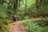 Tramper;tramp;trampers;tramping;walk;walker;walkers;walking;hike;hiking;hiker;hikers;trek;treks;trekking;treker;trekers;trekker;trekkers;Routeburn-Track;routeburn;great-walk;Routeburn-Gorge;Mt-Aspiring-National-Park;south-island;new-zealand;backpack;forest;forests;bush;rainforest;rainforests;native;vegetation;green;lush;verdant;moss;fern;ferns;mosses;tree;trees;natural;clean-green;clean