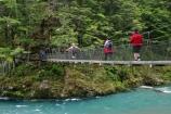 beautiful;beauty;Beech-Forest;bridge;bridges;bush;endemic;foot-bridge;foot-bridges;footbridge;footbridges;forest;forests;great-walk;green;hike;hiker;hikers;hiking;hiking-track;hiking-tracks;mt-aspiring-national-park;national-parks;native;native-bush;natives;natural;nature;New-Zealand;Nothofagus;pedestrian-bridge;pedestrian-bridges;rain-forest;rain-forests;rain_forest;rain_forests;rainforest;rainforests;river;routeburn;routeburn-track;scene;scenic;southern-beeches;swing-bridge;swing-bridges;timber;track;tracks;tramp;tramper;trampers;tramping;tree;tree-trunk;tree-trunks;trees;trek;treker;trekers;treking;trekker;trekkers;trekking;trunk;trunks;walk;walker;walkers;walking;walking-track;walking-tracks;wire-bridge;wire-bridges;wood;woods