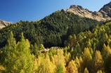autuminal;autumn;autumn-colour;autumn-colours;autumnal;back-country;backcountry;building;buildings;Central-Otago;color;colors;colour;colours;deciduous;fall;forest;golden;heritage;high-altitude;high-country;highcountry;highlands;historic;historic-building;historic-buildings;Historic-Skippers-Settlement;historical;historical-building;historical-buildings;history;larch;larch-tree;larch-trees;Larix-decidua;N.Z.;near-Queenstown;New-Zealand;NZ;old;Otago;pine;pine-tree;pine-trees;pinus-radiata;Queenstown;remote;remoteness;S.I.;season;seasonal;seasons;SI;Skippers;Skippers-Canyon;South-Is.;South-Island;Southern-Lakes;Southern-Lakes-District;Southern-Lakes-Region;tradition;traditional;tree;trees;uplands;yellow