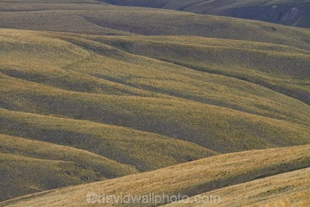 7291;area;back-country;backcountry;Central-Otago;conservation;golden;high-altitude;high-country;Highcountry;highlands;hill;hills;island;kopuwai;Kopuwai-Conservation-Area;man;N.Z.;new;new-zealand;NZ;old;Old-Man-Range;range;remote;remoteness;rolling;rolling-hills;rolling-tussock-hills;S.I.;SI;south;South-Is;South-Island;Southland;Sth-Is;tussock;tussocks;upland;uplands;zealand