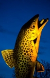 fishing;fish;statue;statues;brown-trout;art;welcome;sign;signs;signage