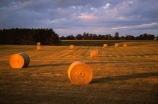 farm;farms;farmland;farming;hay;field;fields;paddock;paddocks;pasture;pastures;meadow;meadows;feed-out;bale;bales;haybale;haybales;agriculture;feeding-out;rural;evening;twilight;dusk;late-afternoon;light;gold;golden;landscape;wanganui;north-island