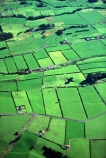 spring;grass;green;fence;fences;hedgerow;hedgerows;sheep;lamb;lambs;farm;farms;farming;farmland;paddock;paddocks;field;fields;pasture;pastures;meadow;meadows;agriculture;rural;dairy;cow;cows;plain;plains;verdant;lush;taranaki;new-zealand;aerials;aerial