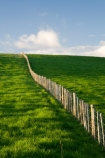agricultural;agriculture;country;countryside;farm;farming;farmland;farms;fence;fence-line;fence-lines;fence_line;fence_lines;fenceline;fencelines;fences;field;fields;meadow;meadows;N.I.;N.Z.;New-Zealand;NI;North-Island;NZ;paddock;paddocks;pasture;pastures;rural;Wanganui;Wanganui-Region