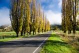agricultural;agriculture;autuminal;autumn;autumn-colour;autumn-colours;autumnal;cloud;clouds;cloudy;color;colors;colour;colours;country;countryside;deciduous;driving;fall;farm;farming;farmland;farms;field;fields;fog;foggy;fogs;highway;highways;leaf;leaves;meadow;meadows;mist;mists;misty;N.I.;N.Z.;New-Zealand;NI;North-Island;NZ;open-road;open-roads;paddock;paddocks;pasture;pastures;poplar;poplar-tree;poplar-trees;poplars;road;road-trip;roads;rural;season;seasonal;seasons;State-Highway-4;State-highway-Four;transport;transportation;travel;traveling;travelling;tree;trees;trip;Wanganui;Wanganui-_-Raetihi-Road;Wanganui-Region