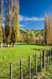 agricultural;agriculture;autuminal;autumn;autumn-colour;autumn-colours;autumnal;color;colors;colour;colours;country;countryside;deciduous;fall;farm;farming;farmland;farms;fence;fence-line;fence-lines;fence_line;fence_lines;fenceline;fencelines;fences;field;fields;Kakatahi;leaf;leaves;Mangawhero-Valley;meadow;meadows;N.I.;N.Z.;New-Zealand;NI;North-Island;NZ;paddock;paddocks;pasture;pastures;poplar;poplar-tree;poplar-trees;poplars;rural;season;seasonal;seasons;tree;trees;Wanganui;Wanganui-Region