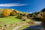 agricultural;agriculture;autuminal;autumn;autumn-colour;autumn-colours;autumnal;color;colors;colour;colours;country;countryside;deciduous;fall;farm;farming;Farmland;farms;field;fields;Kakatahi;leaf;leaves;Mangawhero-River;meadow;meadows;N.I.;N.Z.;New-Zealand;NI;North-Island;NZ;paddock;paddocks;pasture;pastures;rural;season;seasonal;seasons;State-Highway-4;tree;trees;Wanganui;Wanganui-_-Raetihi-Road;Wanganui-Region