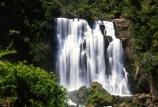 brook;calm;calmness;fern;forest;green;native-bush;natural;nature;stream;water;water-falls;waterfall;waterfalls