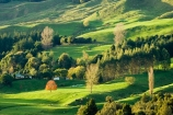 agricultural;agriculture;autuminal;autumn;autumn-colour;autumn-colours;autumnal;color;colors;colour;colours;country;countryside;deciduous;fall;farm;farming;farmland;farms;field;fields;green;King-Country;leaf;leaves;Mapara-Stream;meadow;meadows;N.I.;N.Z.;New-Zealand;NI;North-Island;NZ;paddock;paddocks;pasture;pastures;rural;season;seasonal;seasons;Te-Kuiti;tree;trees;Waikato-Region